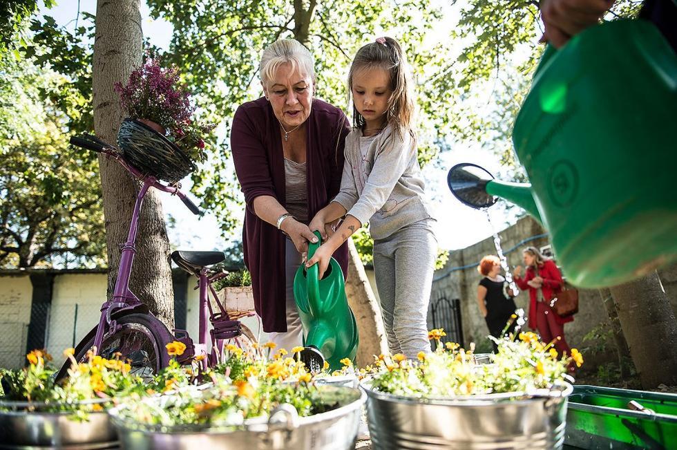 Jak założyć ogród społeczny – bezpłatny przewodnik